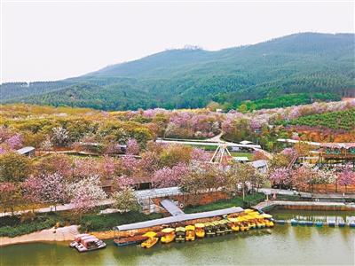 赏花经济带 热村落旅游